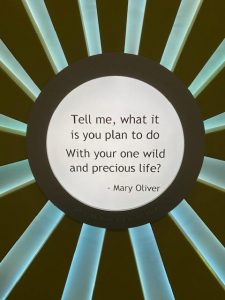 """Tell me, what it is you plan to do With your one wild and precious life?"""
